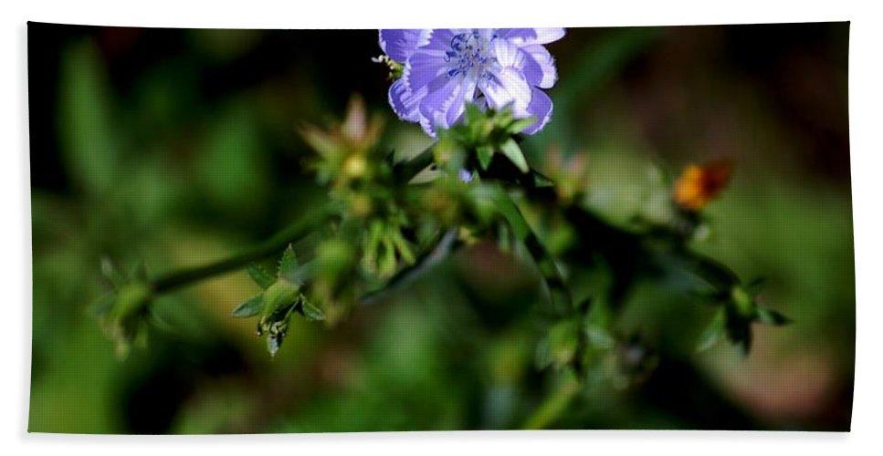 Digital Photograph Beach Towel featuring the photograph Lavender Hue by David Lane