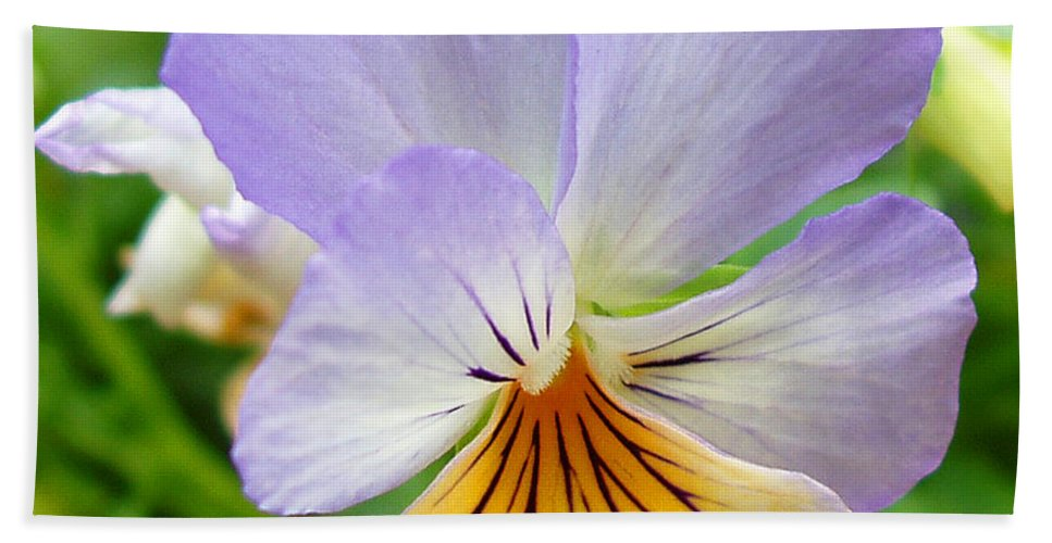 Pansy Beach Towel featuring the photograph Lavender Pansy by Nancy Mueller