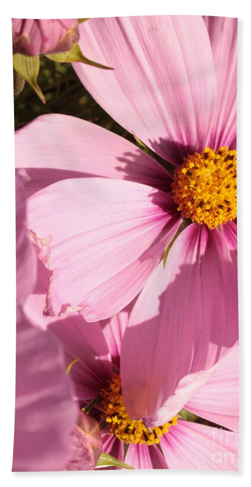 Pink Cosmos Beach Towel featuring the photograph Layers Of Pink Cosmos by Carol Groenen