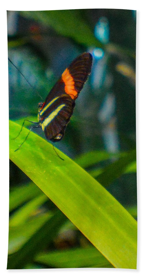 Butterfly Beach Towel featuring the photograph Lazy Butterfly by Miranda Strapason