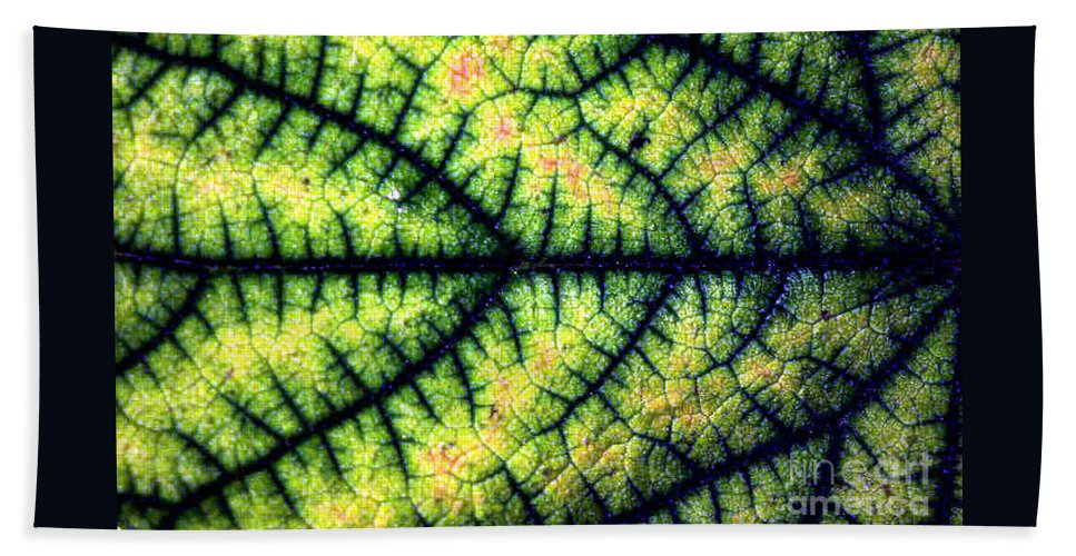 Leaf Beach Towel featuring the photograph Leaf by Dragica Micki Fortuna