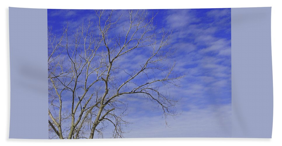 Branches Beach Towel featuring the photograph Leafless by Ann Horn