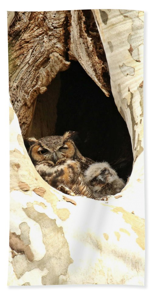 Great Horned Owl Beach Towel featuring the photograph Lean On Me by Heather King