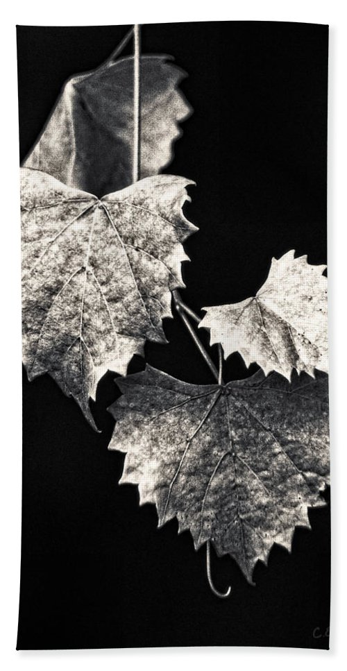 B&w Beach Towel featuring the photograph Leaves by Christopher Holmes