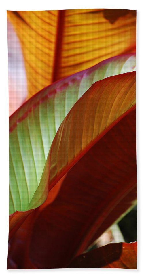 Leaves Beach Towel featuring the photograph Leaves by Robert Meanor