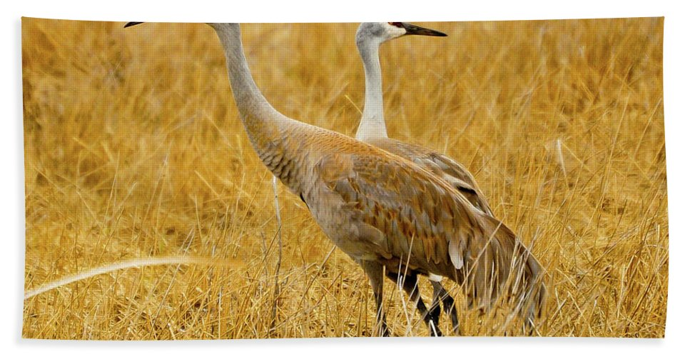Sandhill Crane Beach Towel featuring the photograph Left Or Right by Greg Norrell