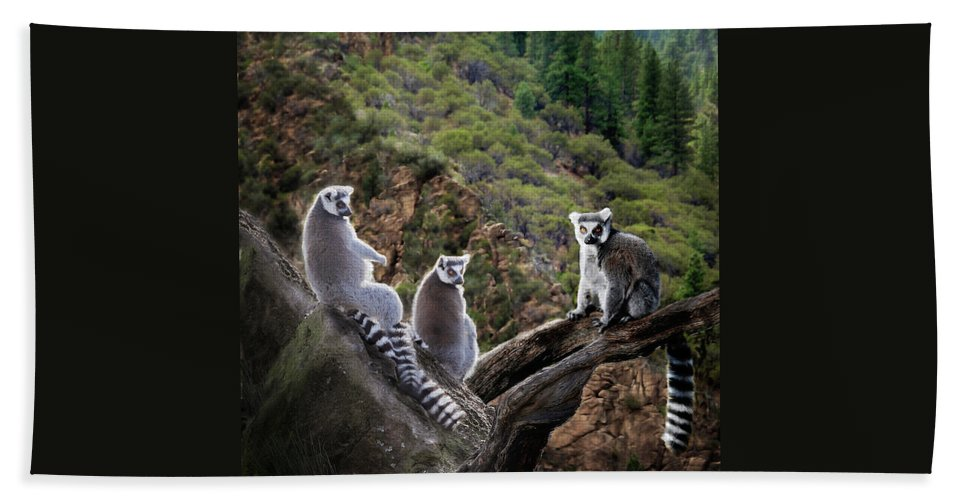 Nature Photography Beach Towel featuring the photograph Lemur Family by Melinda Hughes-Berland