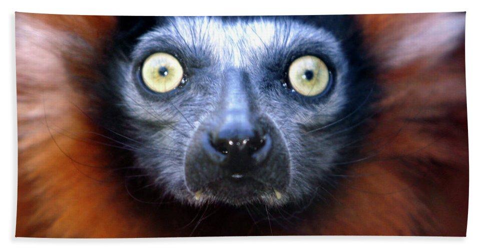 Animal Beach Towel featuring the photograph Lemur Glare by Alan Look