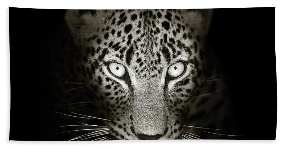 Leopard Beach Towel featuring the photograph Leopard portrait in the dark by Johan Swanepoel