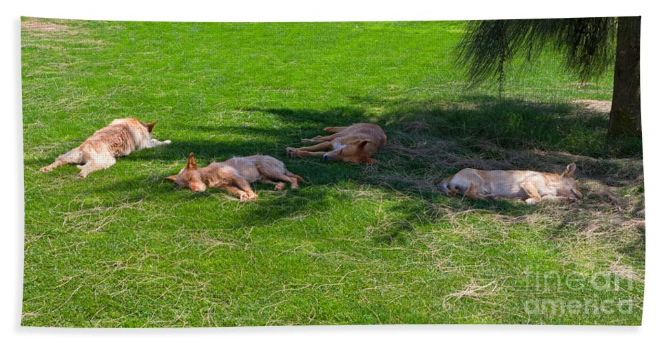 Dogs Beach Towel featuring the photograph Let Sleeping Dogs Lie by Louise Heusinkveld