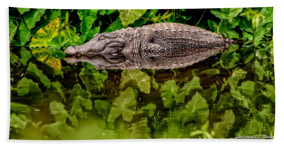 Alligator Beach Towel featuring the photograph Let Sleeping Gators Lie by Christopher Holmes