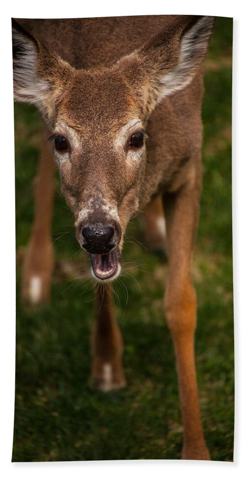 Deer Beach Towel featuring the photograph Lets Talk by Karol Livote