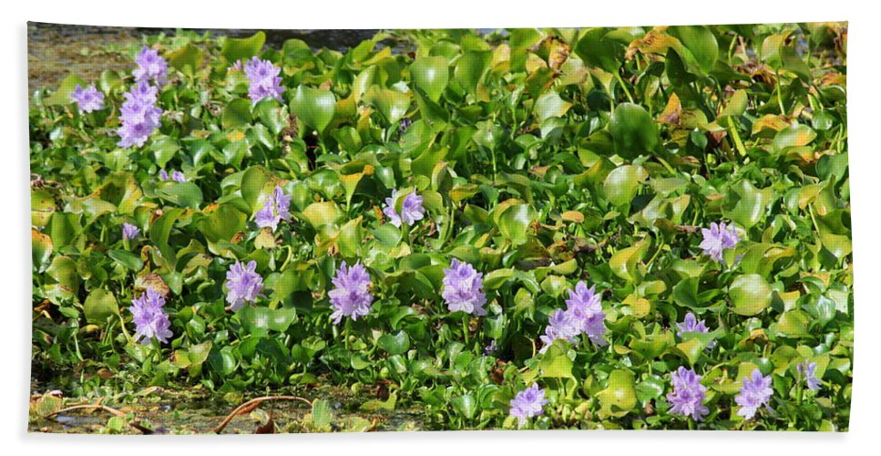 Wetlands Beach Towel featuring the photograph Lettuce Lake Flowers by Carol Groenen