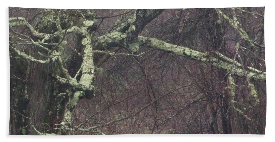 Photography Beach Towel featuring the photograph Lichen by Steven Natanson
