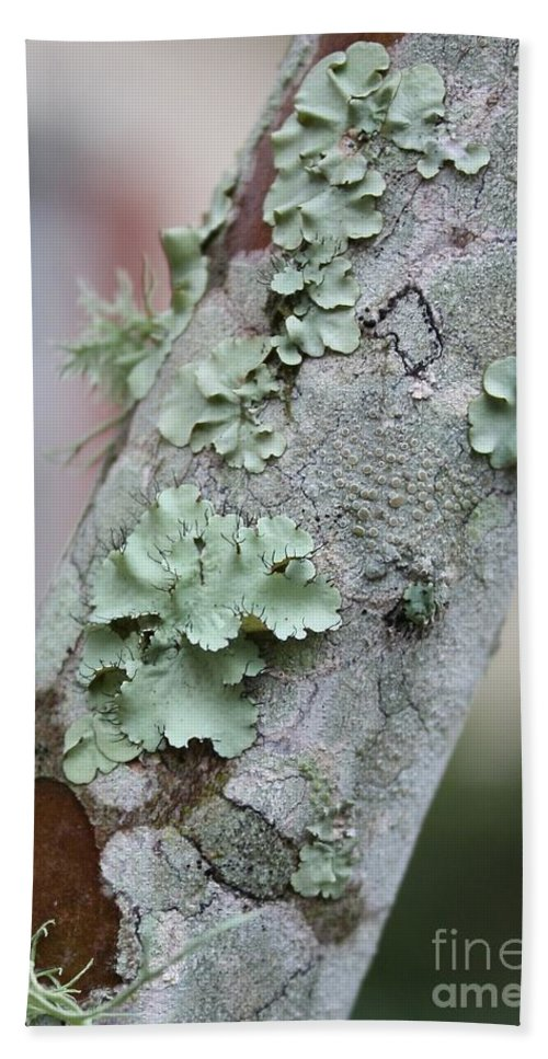 Nature Beach Towel featuring the photograph Lichens 2 by Carol Groenen