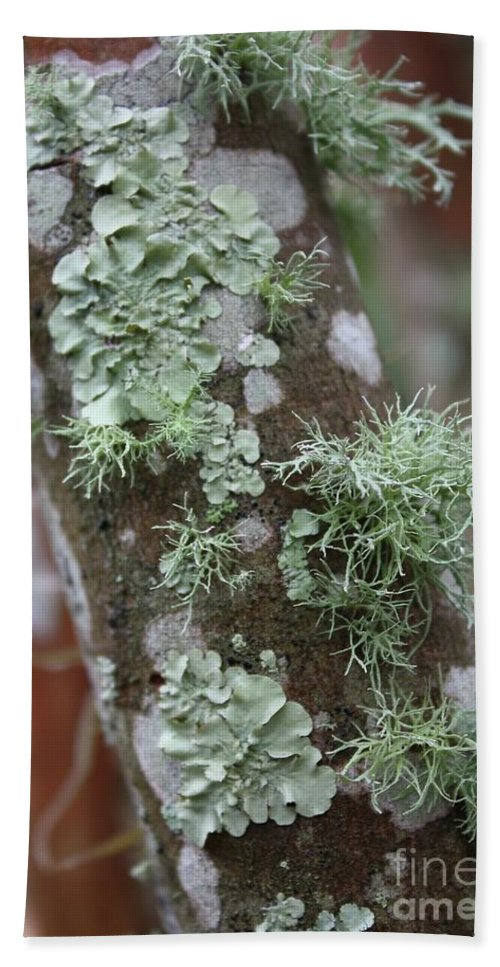 Nature Beach Towel featuring the photograph Lichens 4 by Carol Groenen