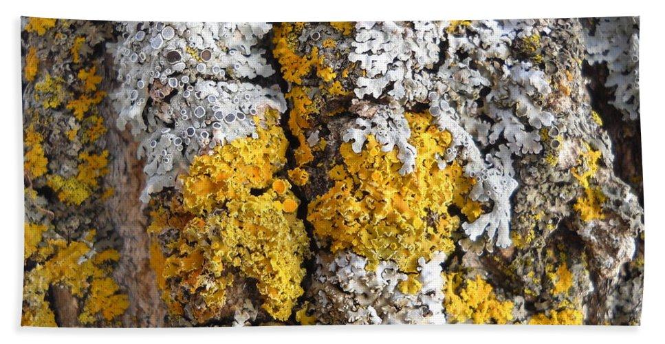 Lichens Beach Towel featuring the photograph Lichens On Tree Bark by Kent Lorentzen