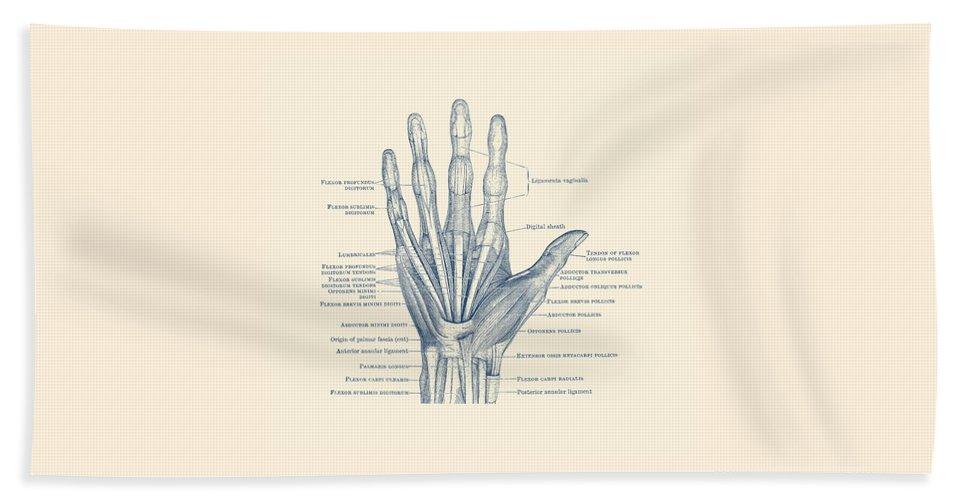 Ligaments And Bones Human Hand Diagram Vintage Anatomy Beach