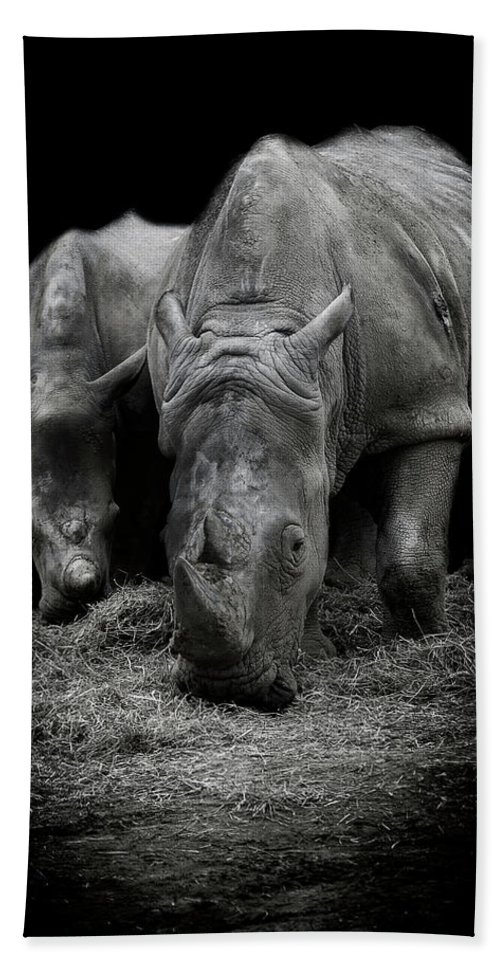 Rhino Beach Towel featuring the photograph Like Father Like Son by Paul Neville