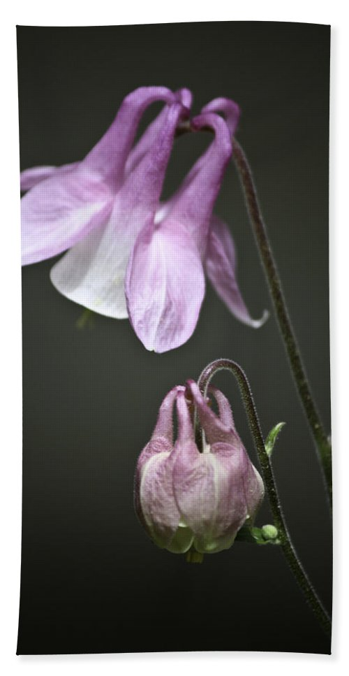 Columbine Beach Towel featuring the photograph Lilac Columbine 3 by Teresa Mucha