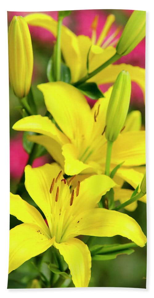 Easter Beach Towel featuring the photograph Easter Lilies by Christina Rollo