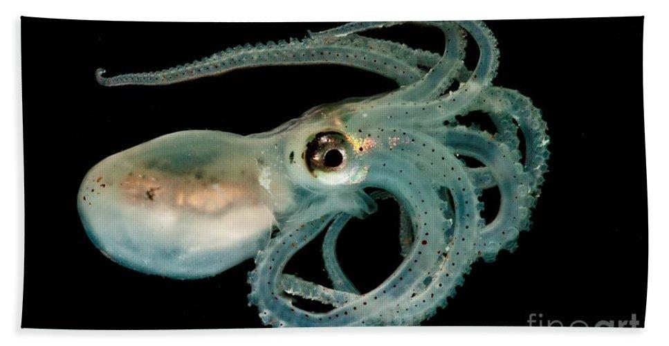 Lilliput Longarm Octopus Beach Towel featuring the photograph Lilliput Longarm Octopus by Dante Fenolio