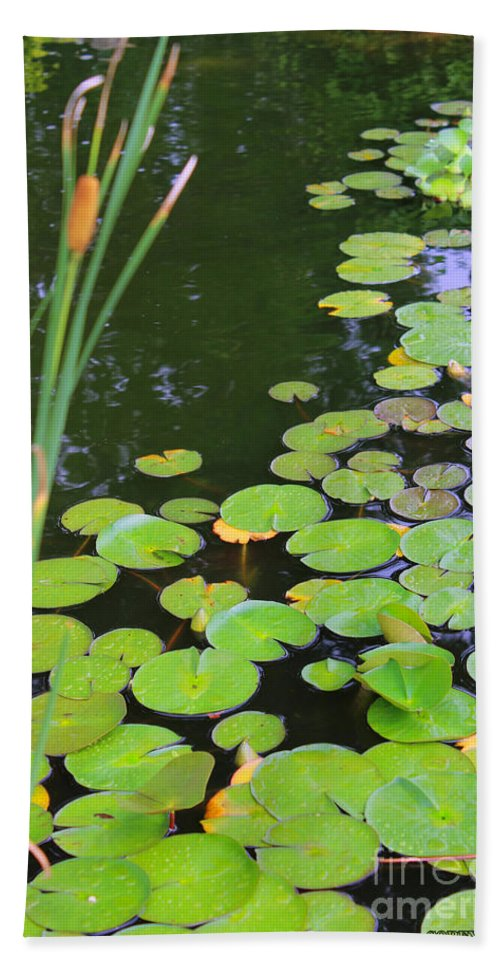 Lillypad Beach Towel featuring the painting Lillypads And Cattails by Corey Ford