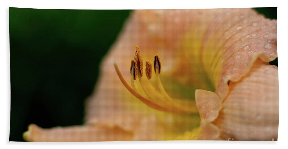 Arrangement Beach Towel featuring the photograph Lily Bloom Profile by Alan Look