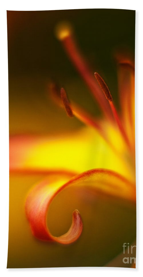 Lilly Beach Towel featuring the photograph Lily Curls by Mike Reid