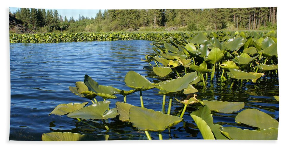 Nature Beach Towel featuring the photograph Lilypads On Amber Lake by Ben Upham III