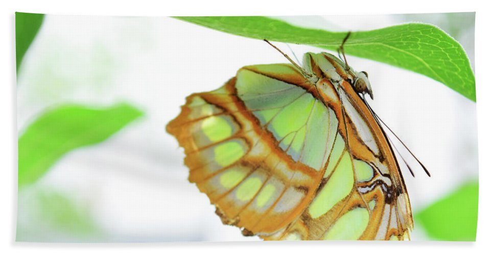 Butterfly Beach Towel featuring the photograph Lime Greens by Sydney Thompson