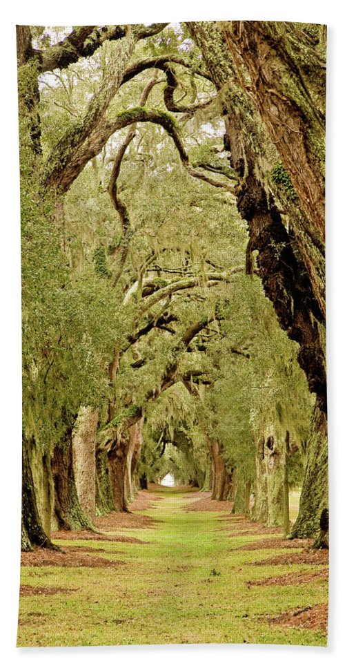 Forest Beach Towel featuring the photograph Line Of Oak Trees To Distance by Darryl Brooks