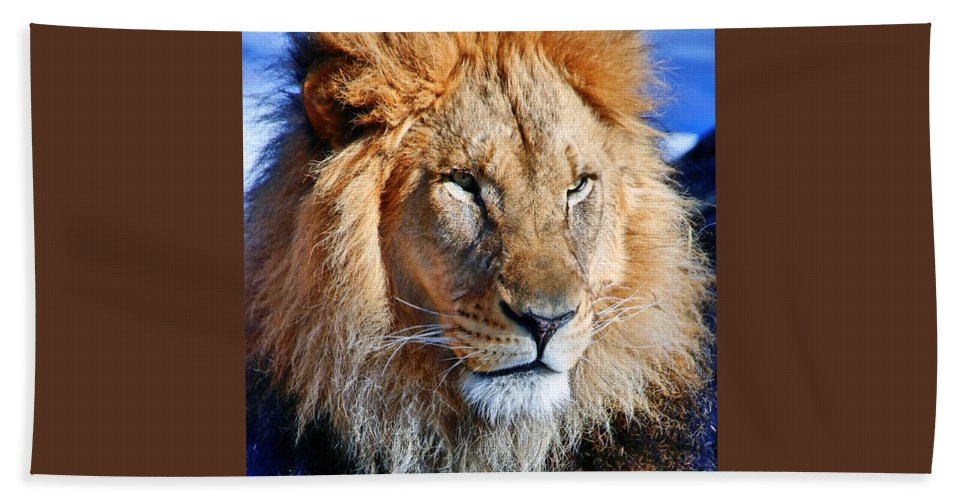 Africa Beach Towel featuring the photograph Lion 09 by Ingrid Smith-Johnsen
