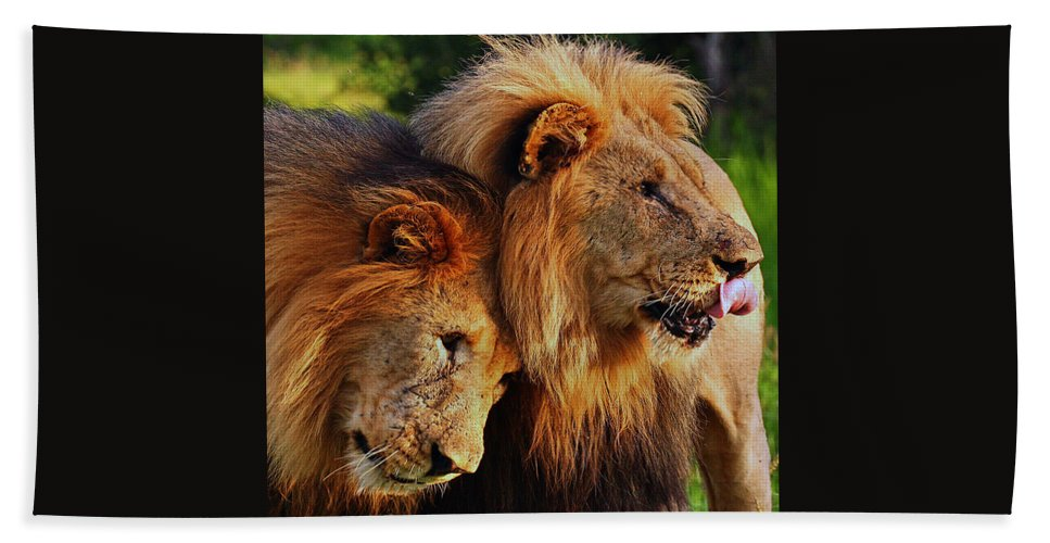 Africa Beach Towel featuring the photograph Lion 22 by Ingrid Smith-Johnsen