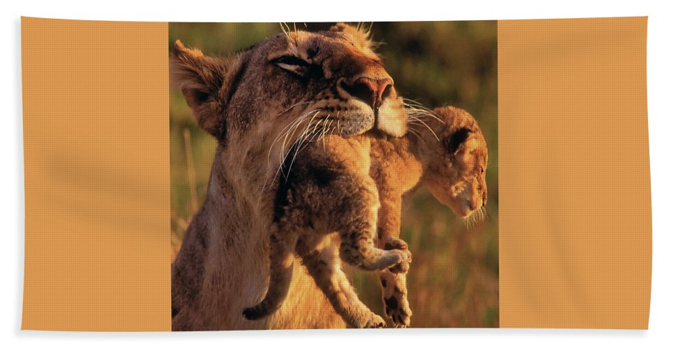 Africa Beach Towel featuring the photograph Lion 32 by Ingrid Smith-Johnsen