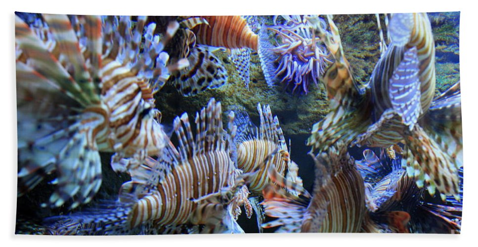 Lion Fish Beach Towel featuring the photograph Lion Fish by Carol Groenen