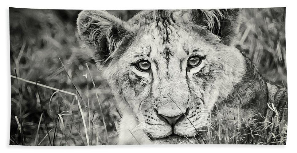 Lioness Beach Towel featuring the photograph Lioness Portrait by Robin Zygelman
