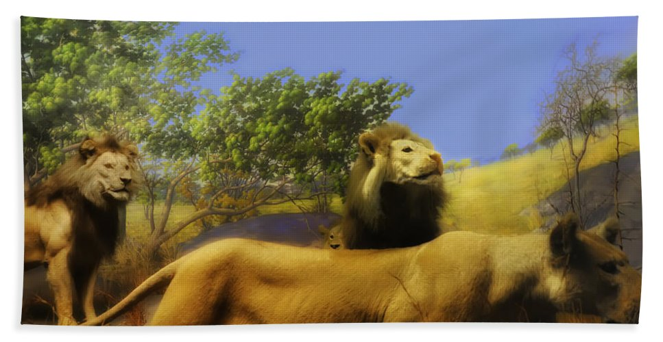 Lion. Lions Beach Towel featuring the photograph Lions Den by Bill Cannon