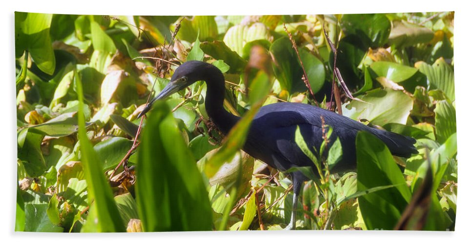Little Blue Heron Beach Towel featuring the photograph Little Blue Heron by David Lee Thompson