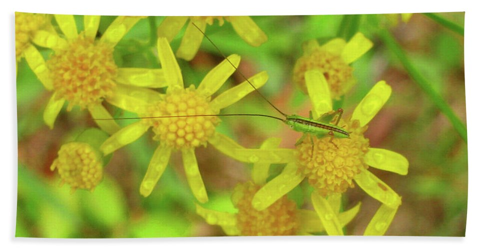 Flowers Beach Towel featuring the photograph Little Grasshopper by Donna Brown