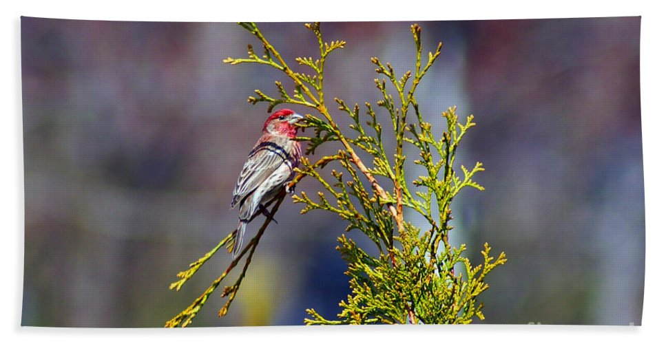Birds Beach Towel featuring the photograph Little Red by Cj Mainor