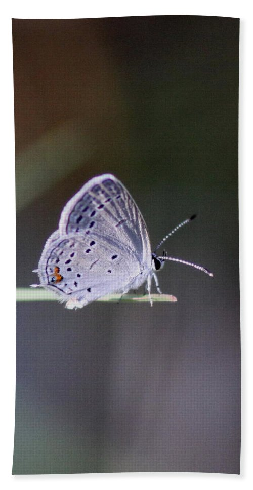 Swallowtail Butterfly Beach Towel featuring the photograph Little Teeny - Butterfly by Travis Truelove