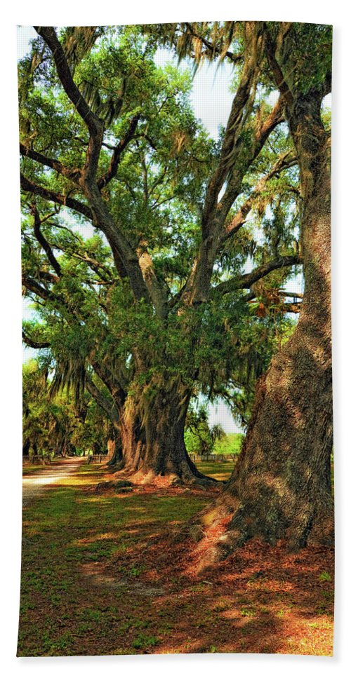 Evergreen Plantation Beach Towel featuring the photograph Live Oak Lane by Steve Harrington