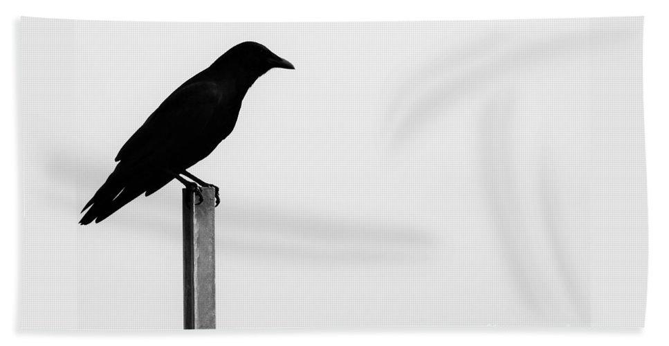 Bird Beach Towel featuring the photograph Lone Bird by Jan Gelders