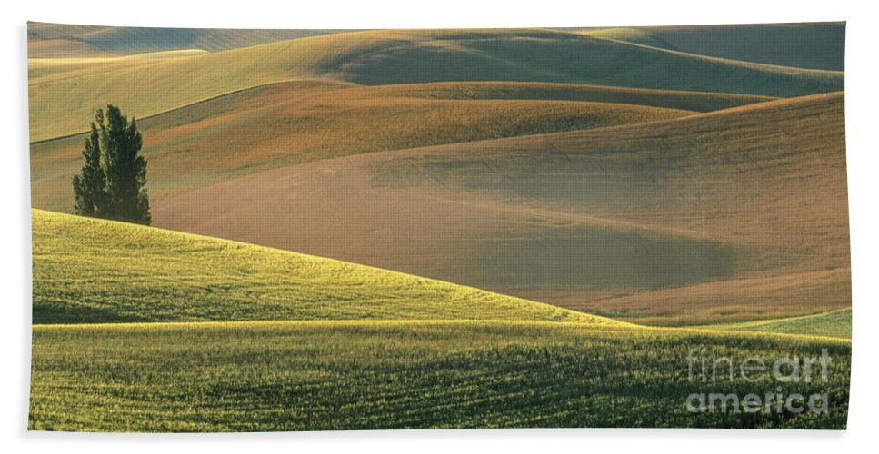 Landscape Beach Towel featuring the photograph Lone Tree In The Palouse by Sandra Bronstein