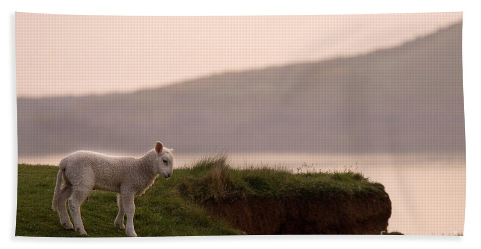 Prancing Lamb Beach Towel featuring the photograph Lonely Little Lamb by Angel Ciesniarska
