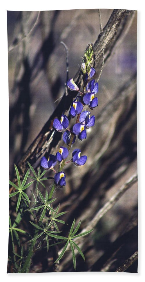 Flower Beach Sheet featuring the photograph Lonely Lupine by Randy Oberg