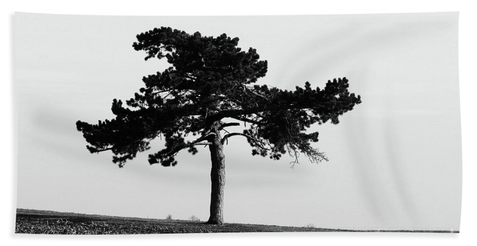 Abstract Beach Towel featuring the photograph Lonely Pine by Alan Look