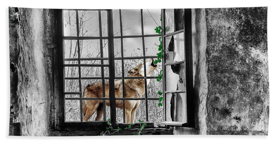 Wolf Beach Towel featuring the photograph Lonely Wolf by Ericamaxine Price
