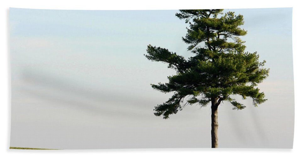Abstract Beach Towel featuring the photograph Lonesome Fir by Alan Look